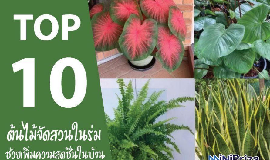 10 ต้นไม้จัดสวนในร่ม ที่ช่วยเพิ่มความสดชื่น เพิ่มอากาศที่ดีให้แก่ผู้ปลูก