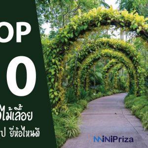 10 อันดับ ค้างไม้เลื้อย สำเร็จรูป ยี่ห้อไหนดี ปี 2021