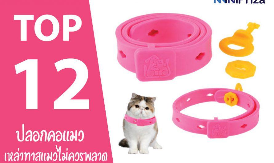 12 อันดับ ปลอกคอแมว แบบไหนดี ที่ทาสแมวไม่ควรพลาด