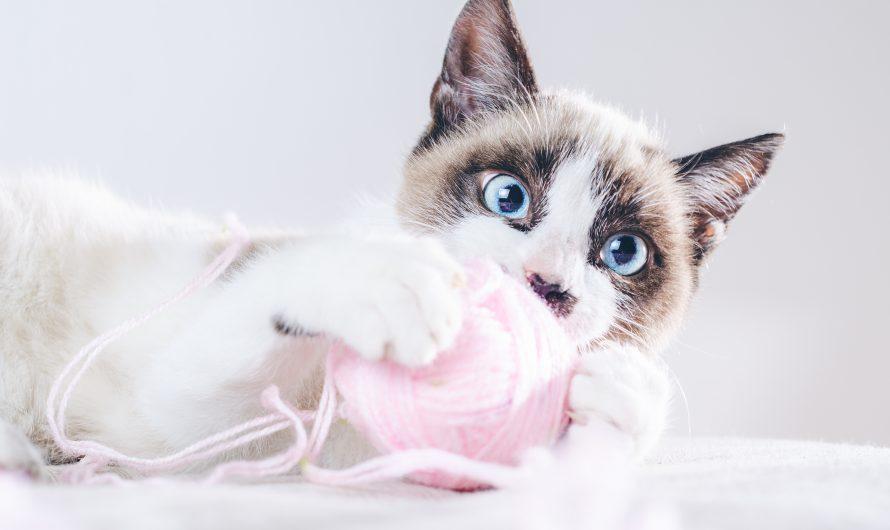 รีวิว 10 อันดับ ของเล่นแมวราคาถูก มีอะไรบ้าง ซื้อที่ไหนดี ปี 2021