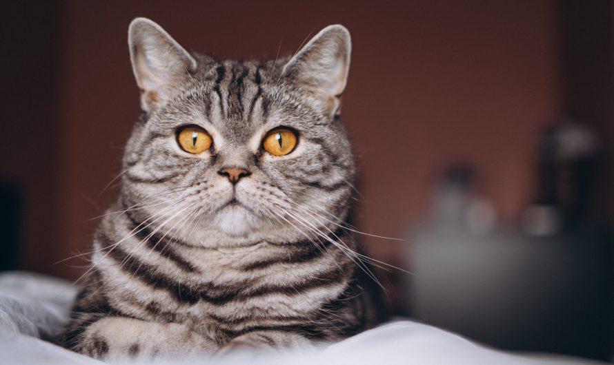 รีวิว ที่นอนแมวเก็บขน ร้านไหนดี ราคาถูก ลดปัญหาขนร่วงเต็มบ้าน  ปี 2021